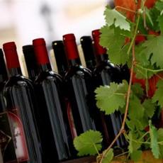 Bratislava und sein Wein